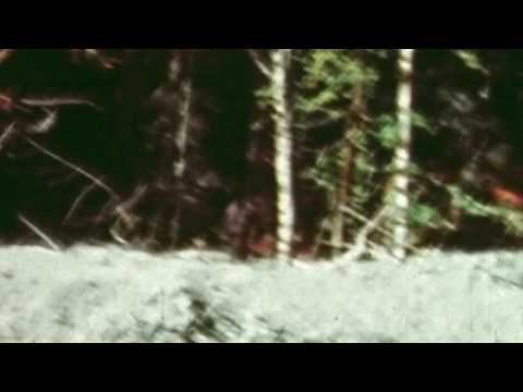 Patterson-Gimlin Bigfoot film slowed down and stablised